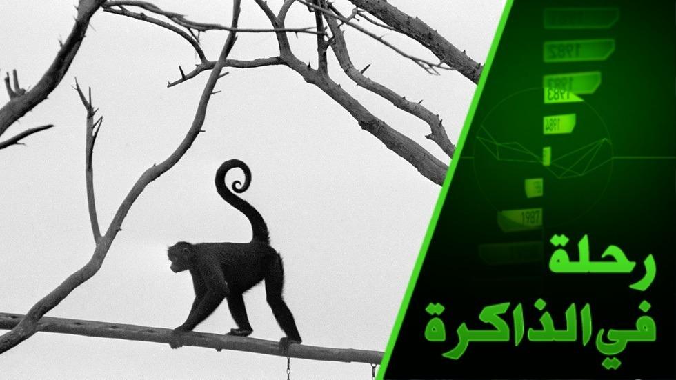لماذا لا تتحول القردة اليوم إلى بشر؟ وإذا كان التطور باطلا فكيف تشكلت الأعراق من آدم؟