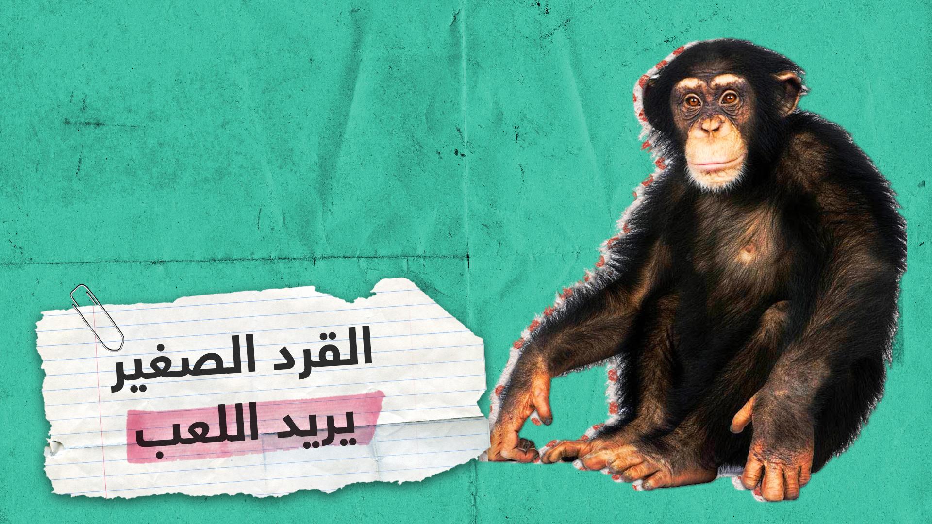 القرد المشاكس الصغير