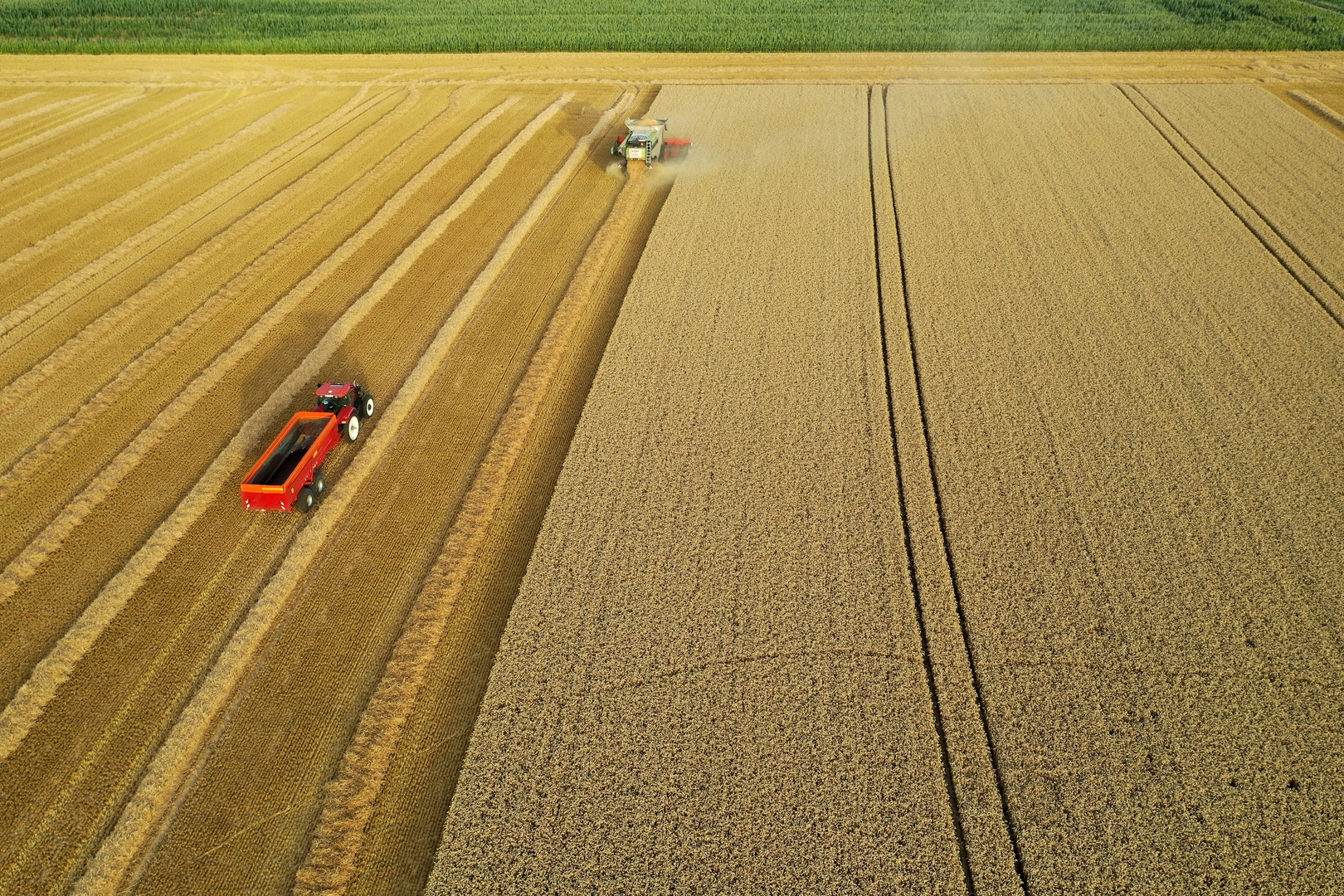 روسيا.. رقم قياسي جديد لمحصول الحبوب