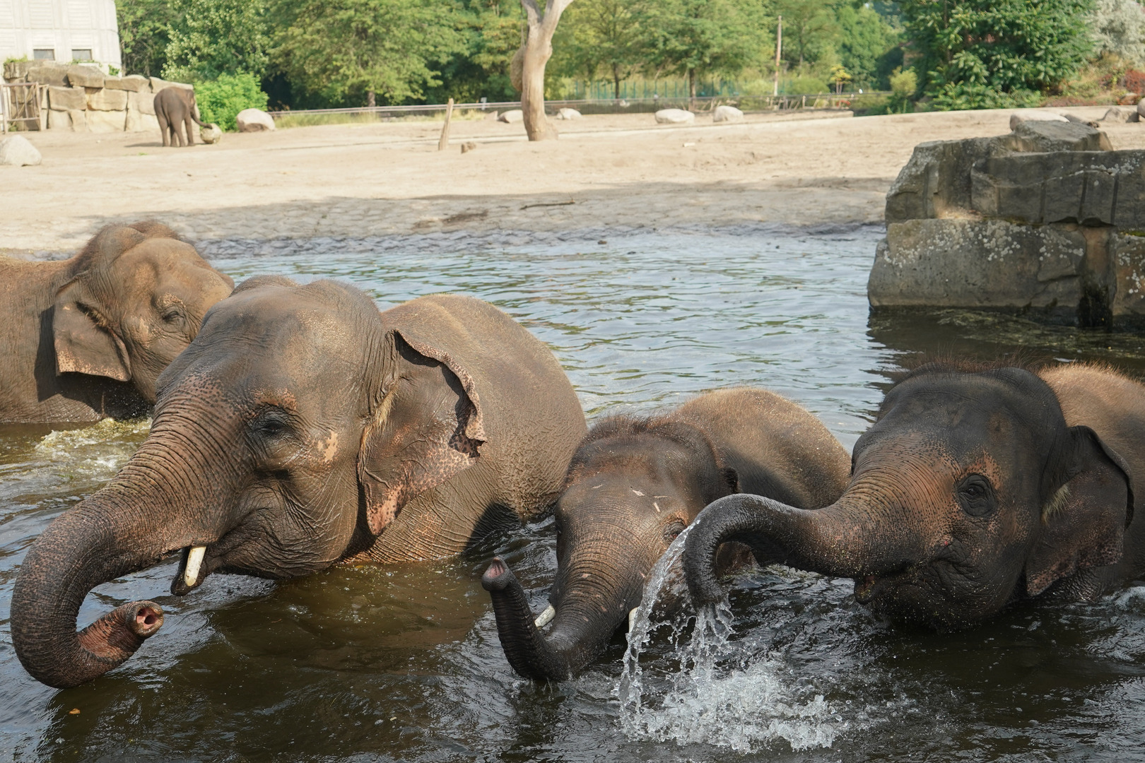 نفوق جماعي للفيلة في زيمبابوي