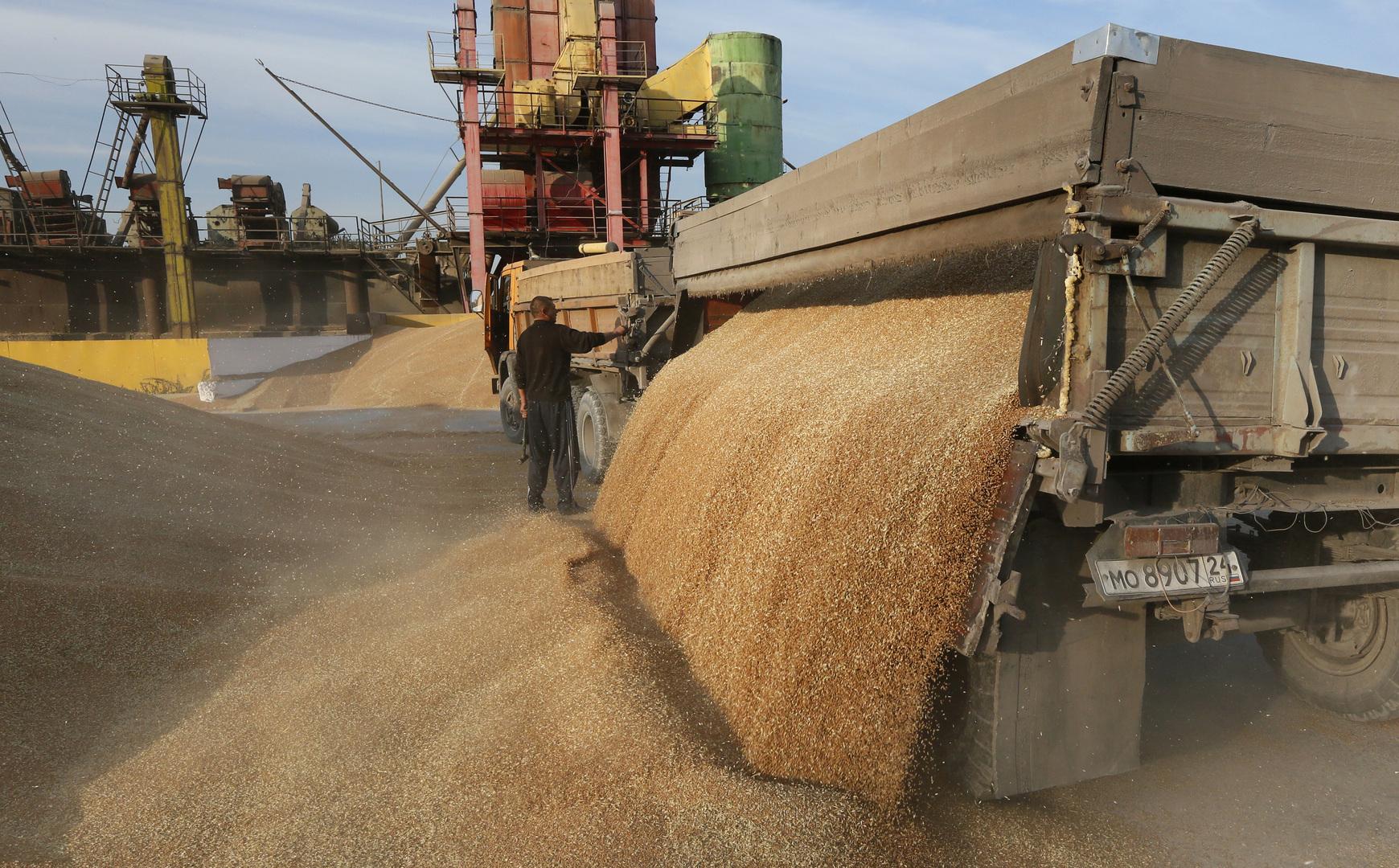 القمح الروسي يغمر مصر