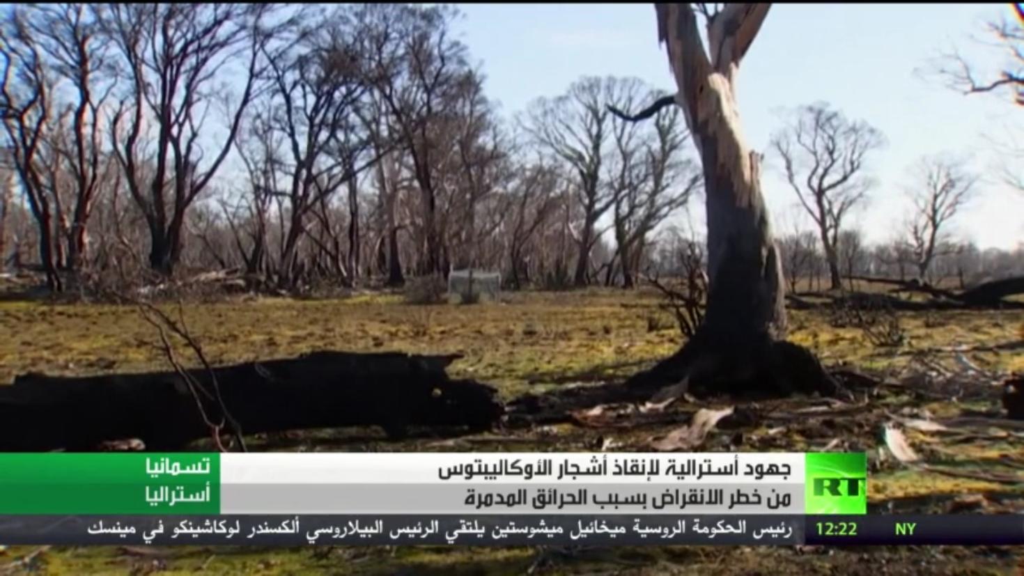 شجر الأوكاليبتوس يواجه خطر الانقراض