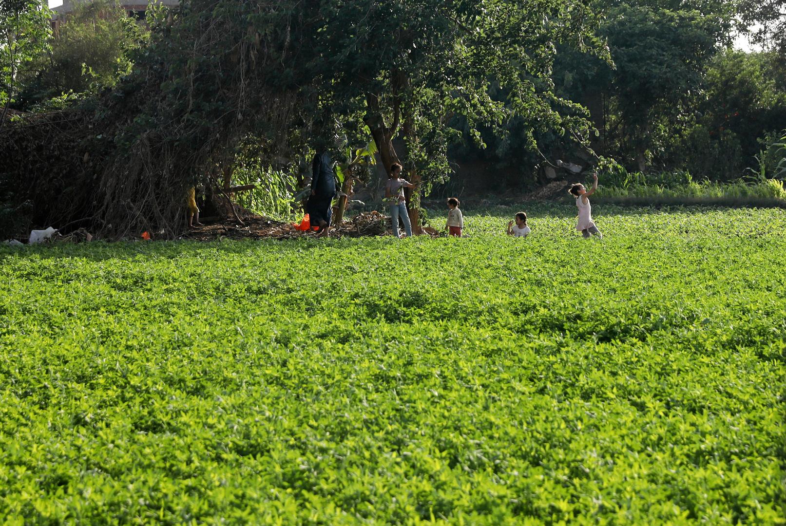 مدبولي: مصر خسرت 90 ألف فدان من الأراضي الزراعية