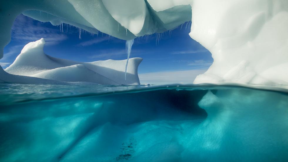 اختراق في أنتاركتيكا: اكتشاف مخلوقات غريبة