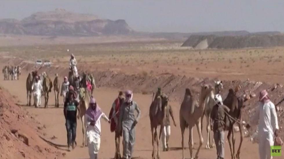 سباقات الهجن تعود من جديد إلى صحراء سيناء