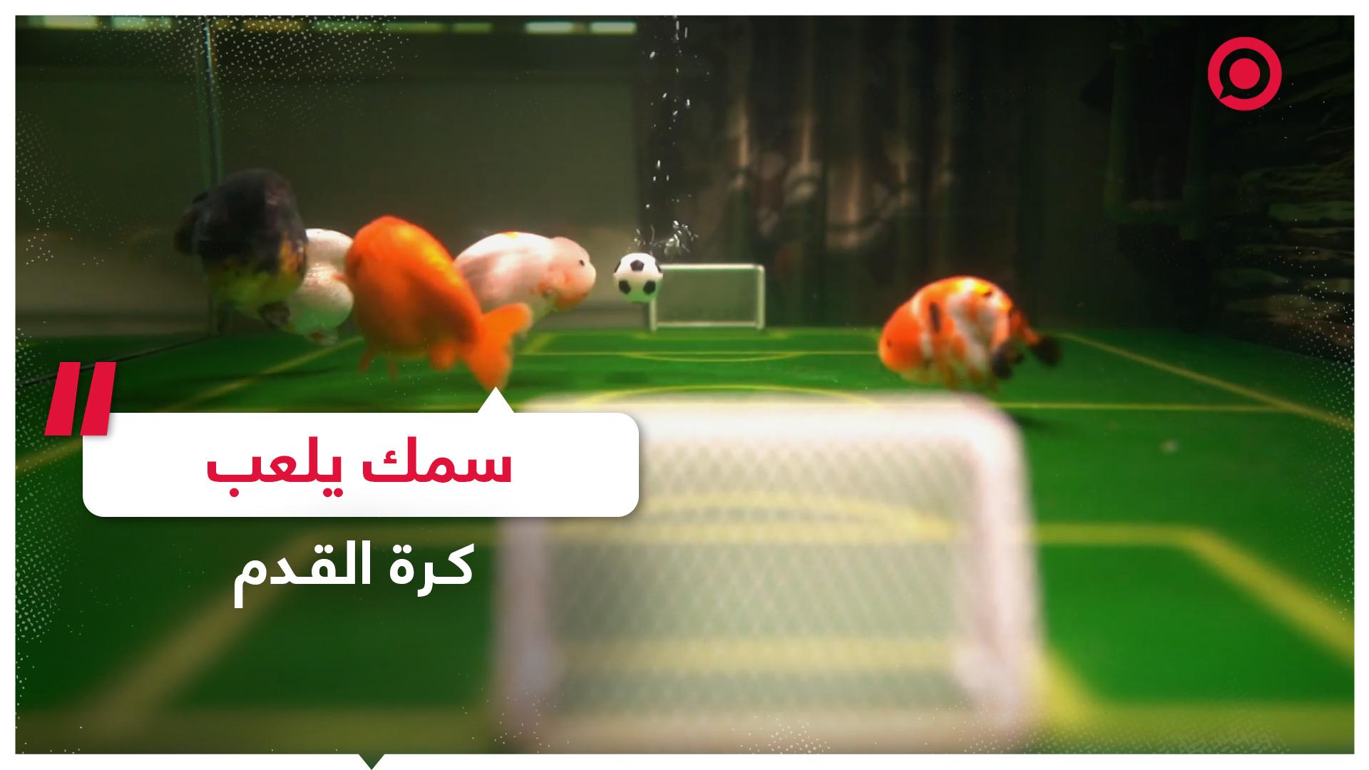 هل رأيت السمك يلعب كرة القدم من قبل؟