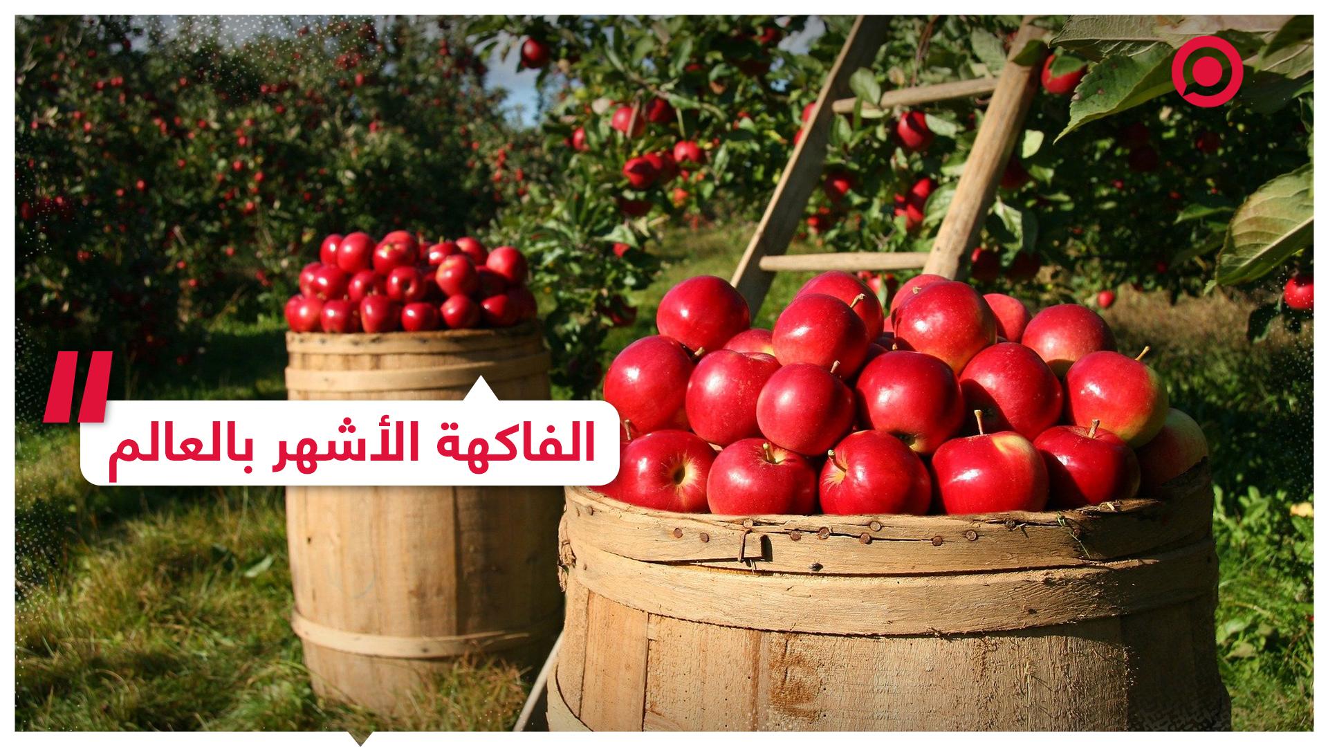تعرف على الفواكه الأكثر انتشارا في العالم وأول ظهور لها