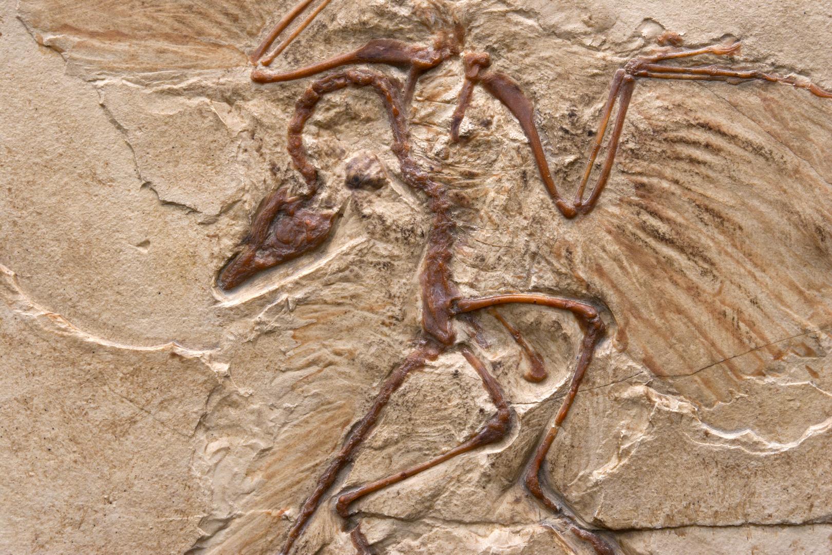 اكتشاف أنواع جديدة من الديناصورات ثنائية الأصابع بلا أسنان تشبه ببغاء عملاقا