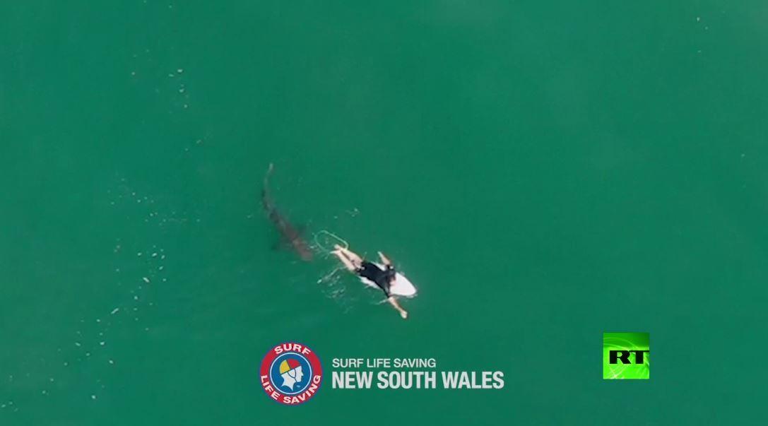 تصوير جوي يظهر محاولة هجوم سمكة قرش على راكب أمواج