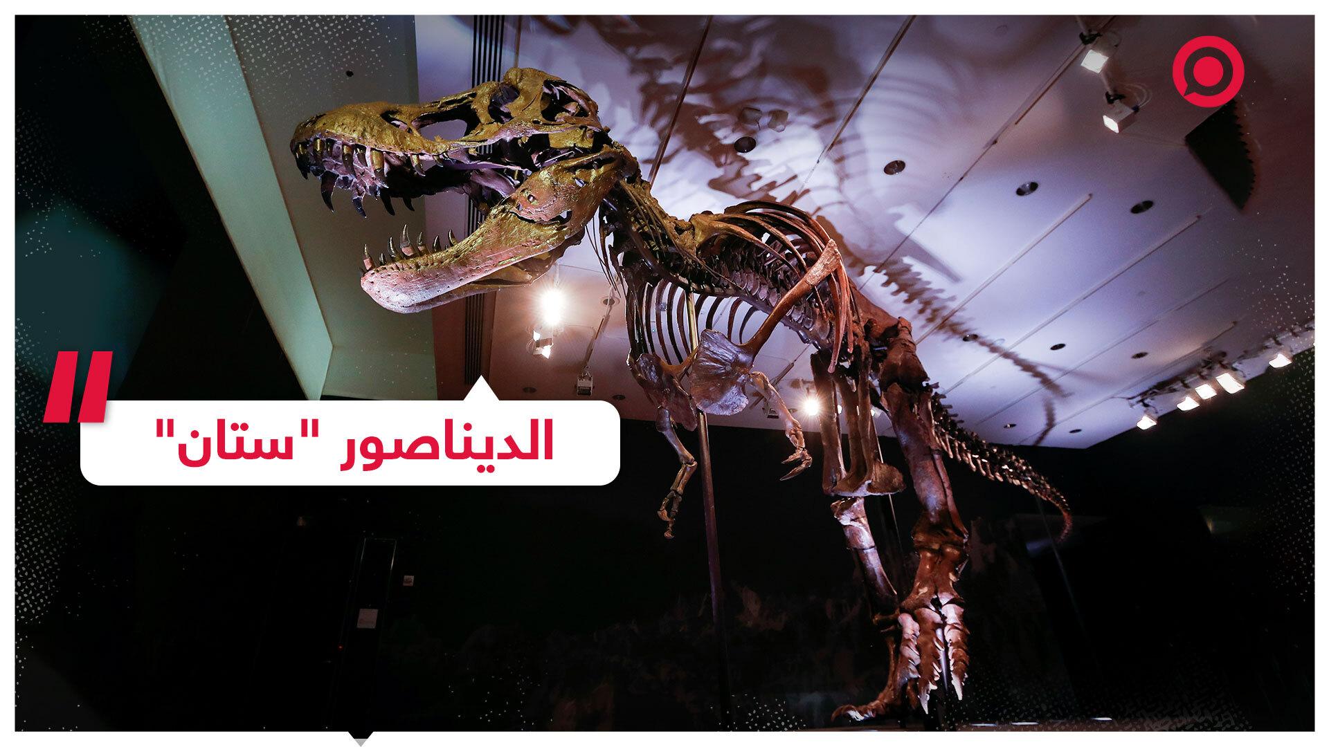بيع هيكل الديناصور