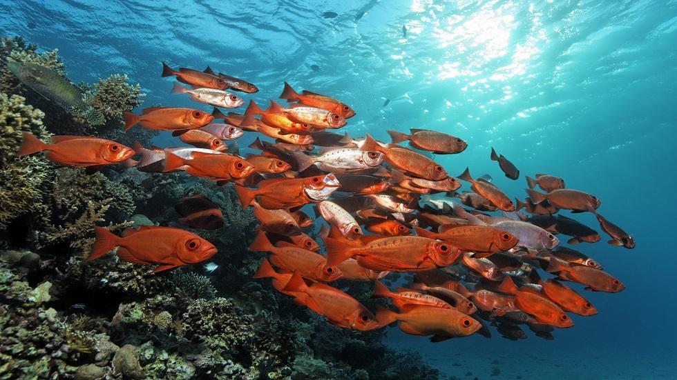 انخفاض حاد بعدد الشعاب المرجانية في الحاجز المرجاني العظيم