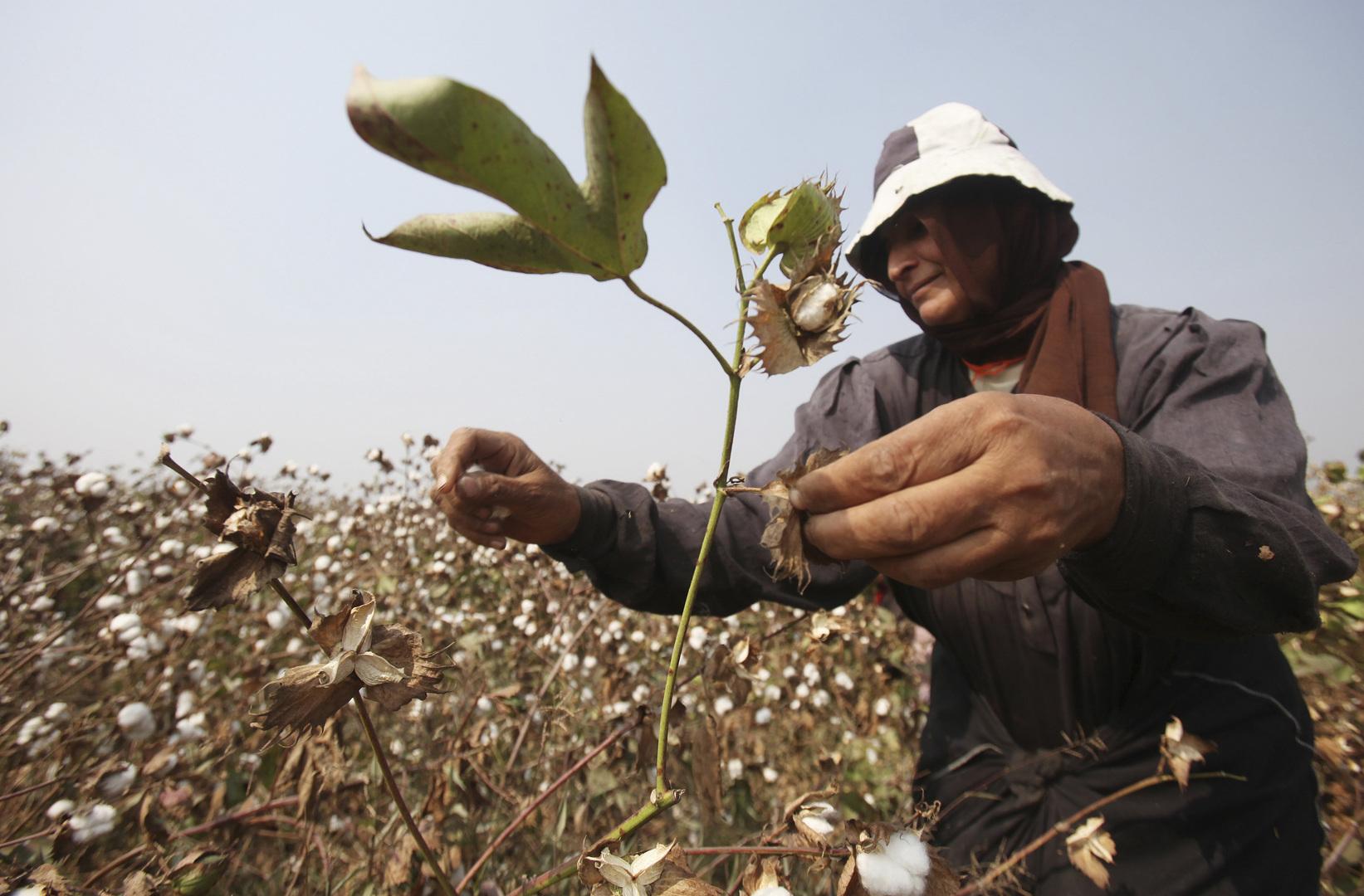 عاملة في الزراعة في مصر