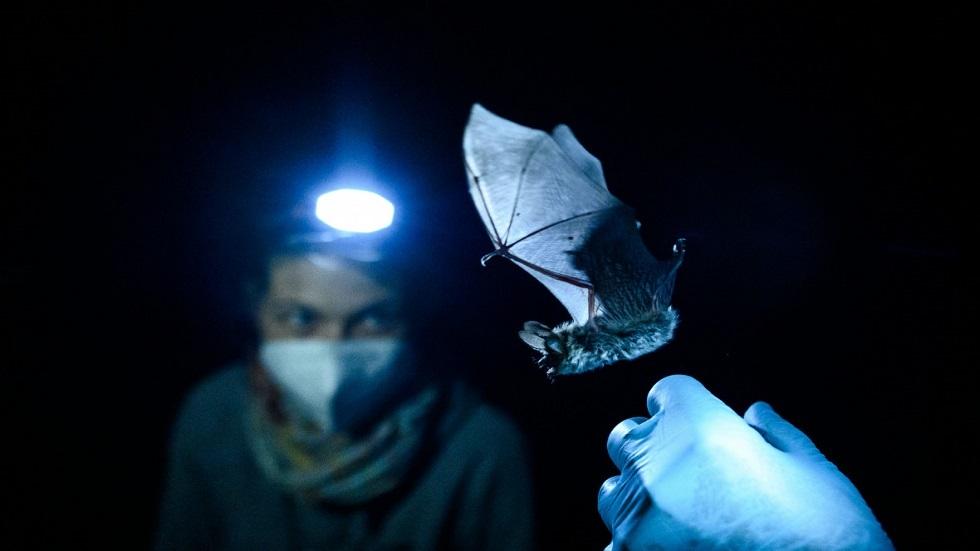 اكتشاف فيروسات تاجية في الخفافيش بروسيا