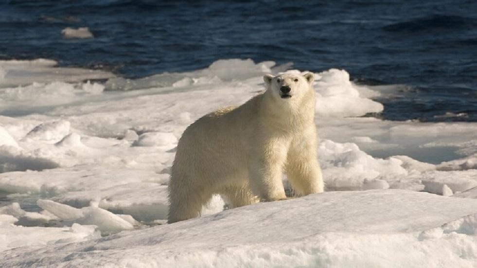 روسيا تشرع بربط القطب الشمالي بإنترنت فائق السرعة