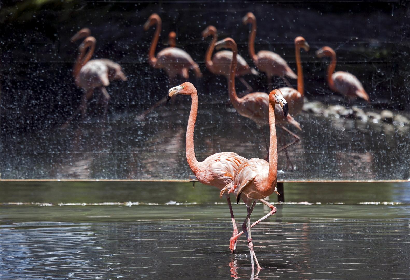 بالصور.. اعتداء في سماء لبنان على أجمل الطيور في العالم