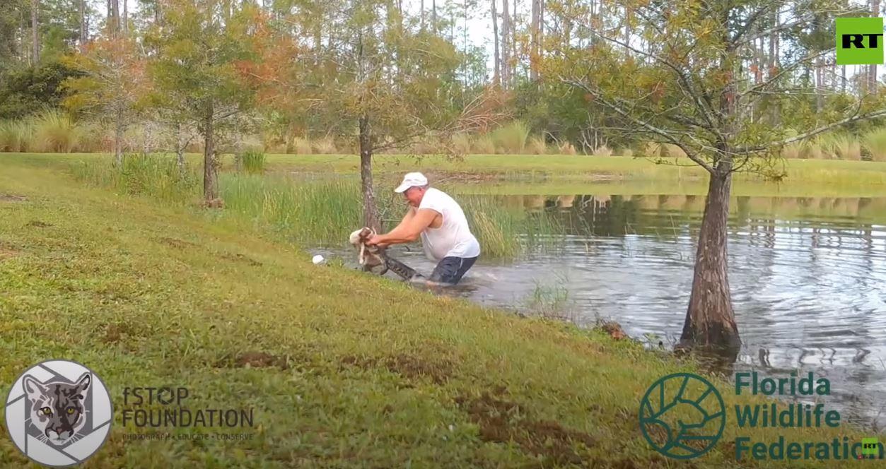 شاهد.. أمريكي يصارع تمساحا لإنقاذ كلبه الصغير