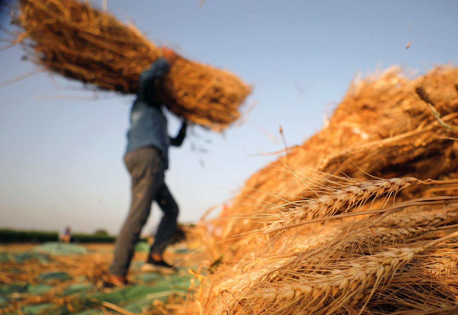 المالية المصرية تؤكد أنها ستدفع ضريبة قيمة مضافة على شحن شحنات القمح المستوردة لحين تعديل القانون