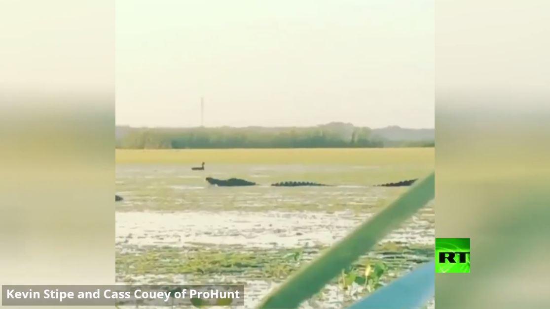 بالفيديو.. صيادون في فلوريدا يصورون تمساحا عملاقا يلتهم بطة