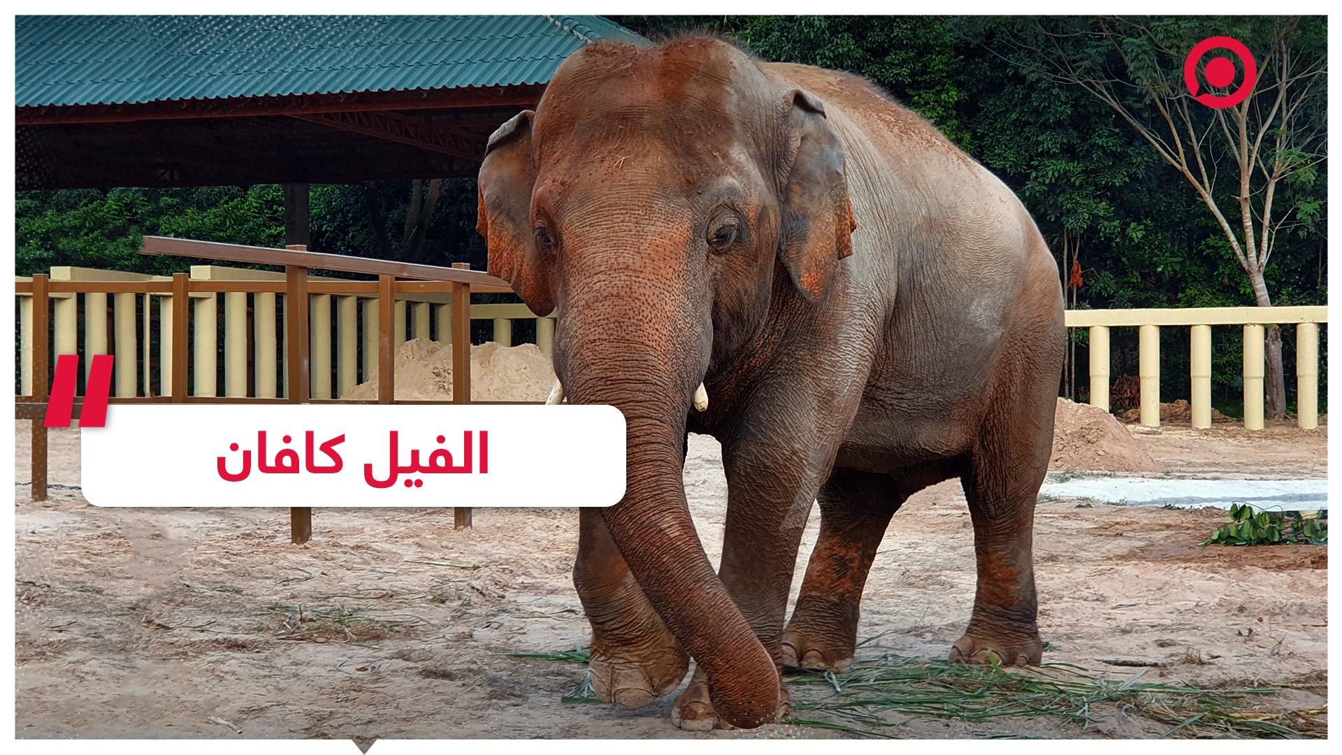 الفيل كافان يصل كمبوديا بعد سنوات من