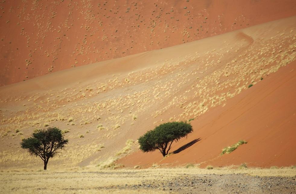 صحراء ناميب في ناميبيا