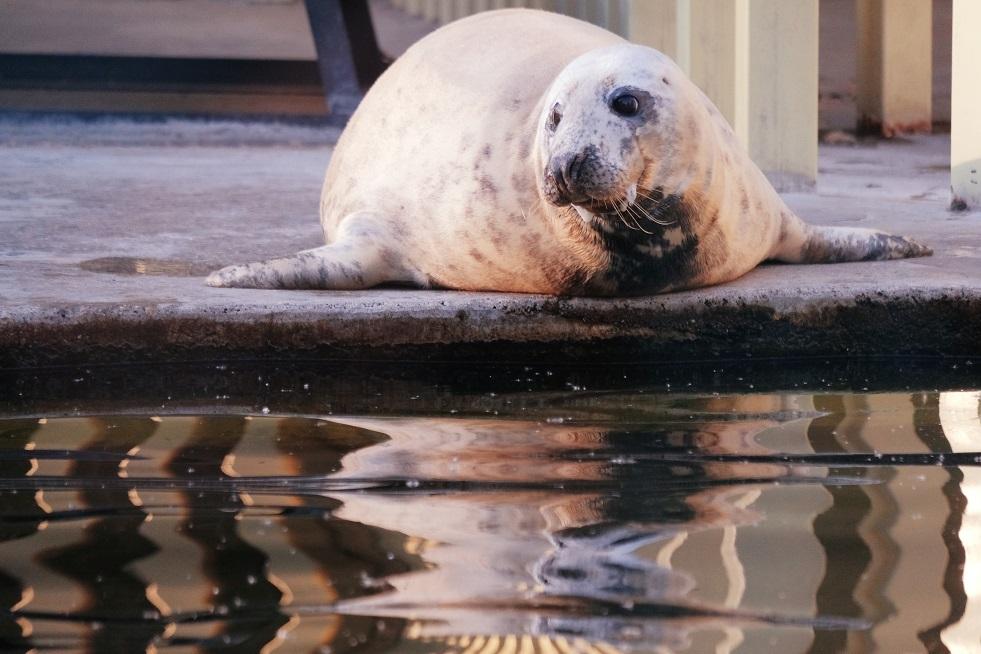 روسيا..العثور على حيوانات فقمة نافقة على شواطئ قزوين