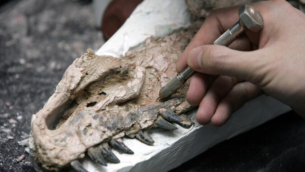 اكتشاف ديناصور غريب بحجم الدجاجة يُدعى