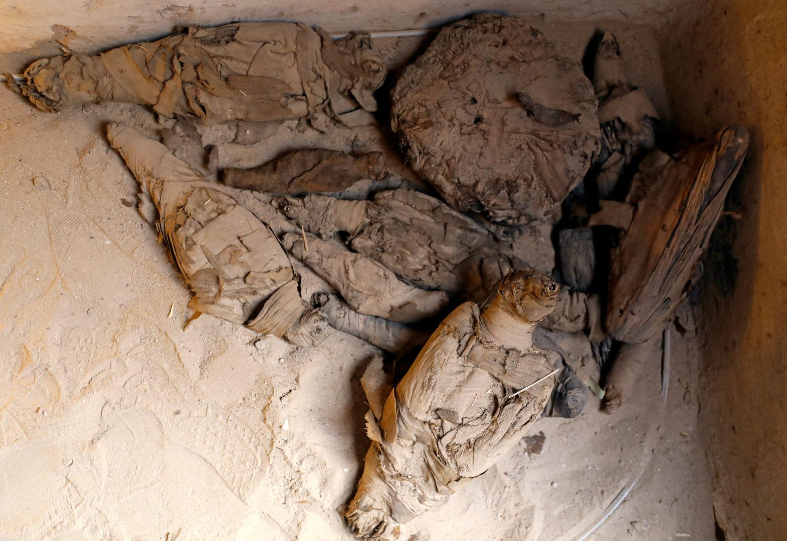 العلماء يحللون مومياء قرود عمرها 3300 عام لتحديد موقع