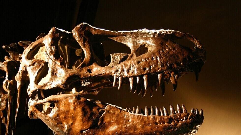 أروع 10 اكتشافات للديناصورات لعام 2020