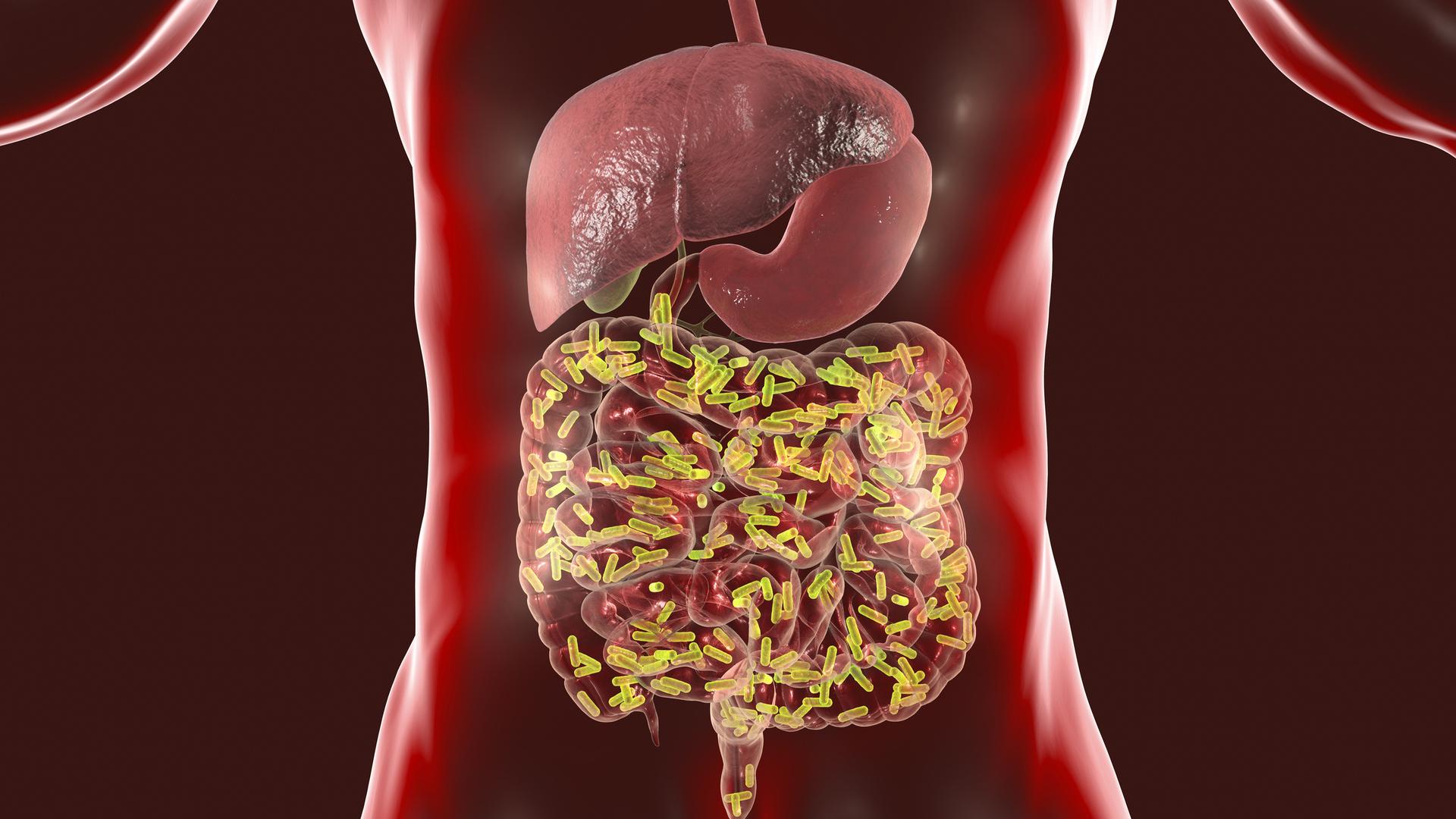 دراسة: بكتيريا الأمعاء تلعب دورا في محاربة كورونا