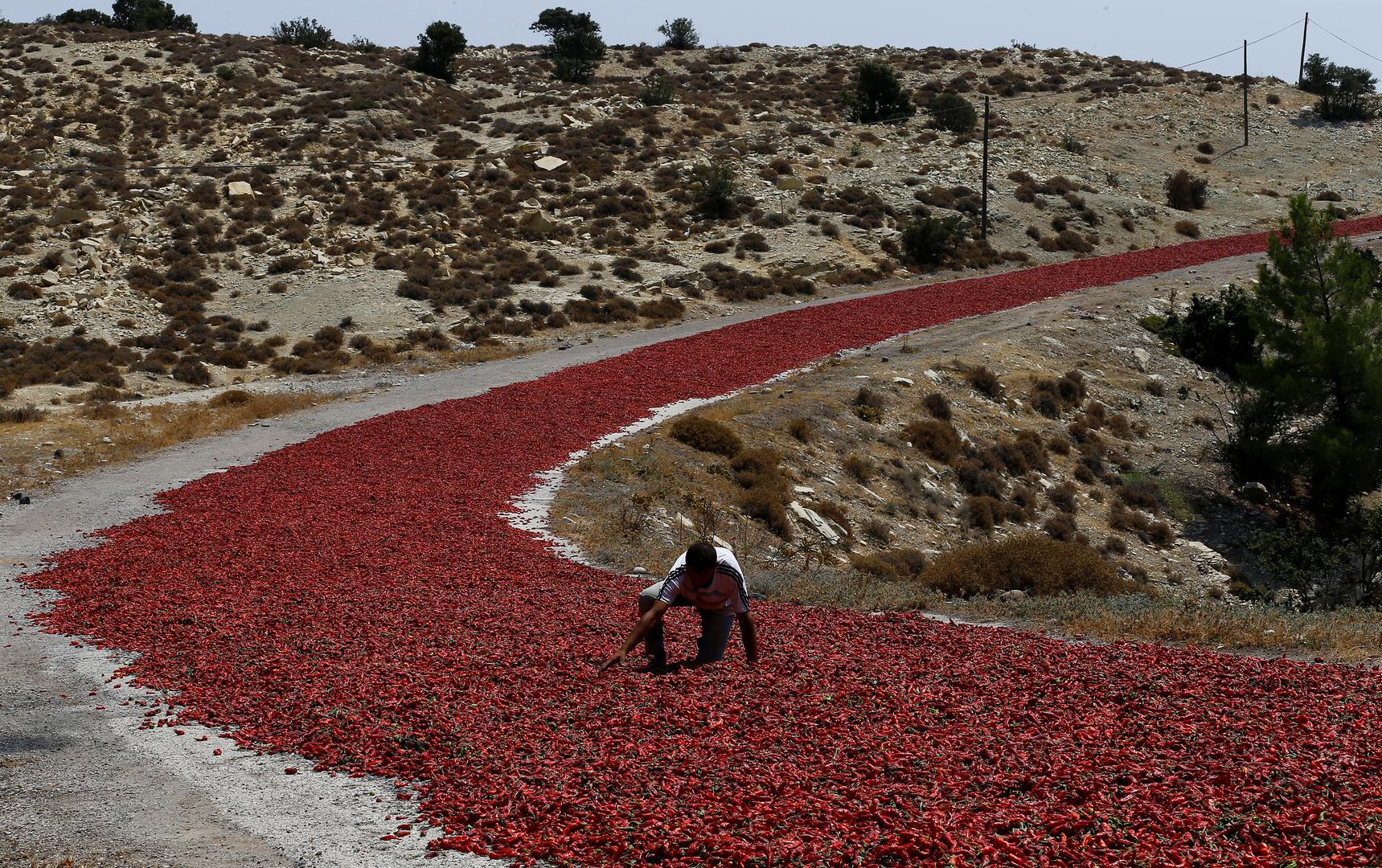 تقارير: انخفاض عدد المزارعين في تركيا