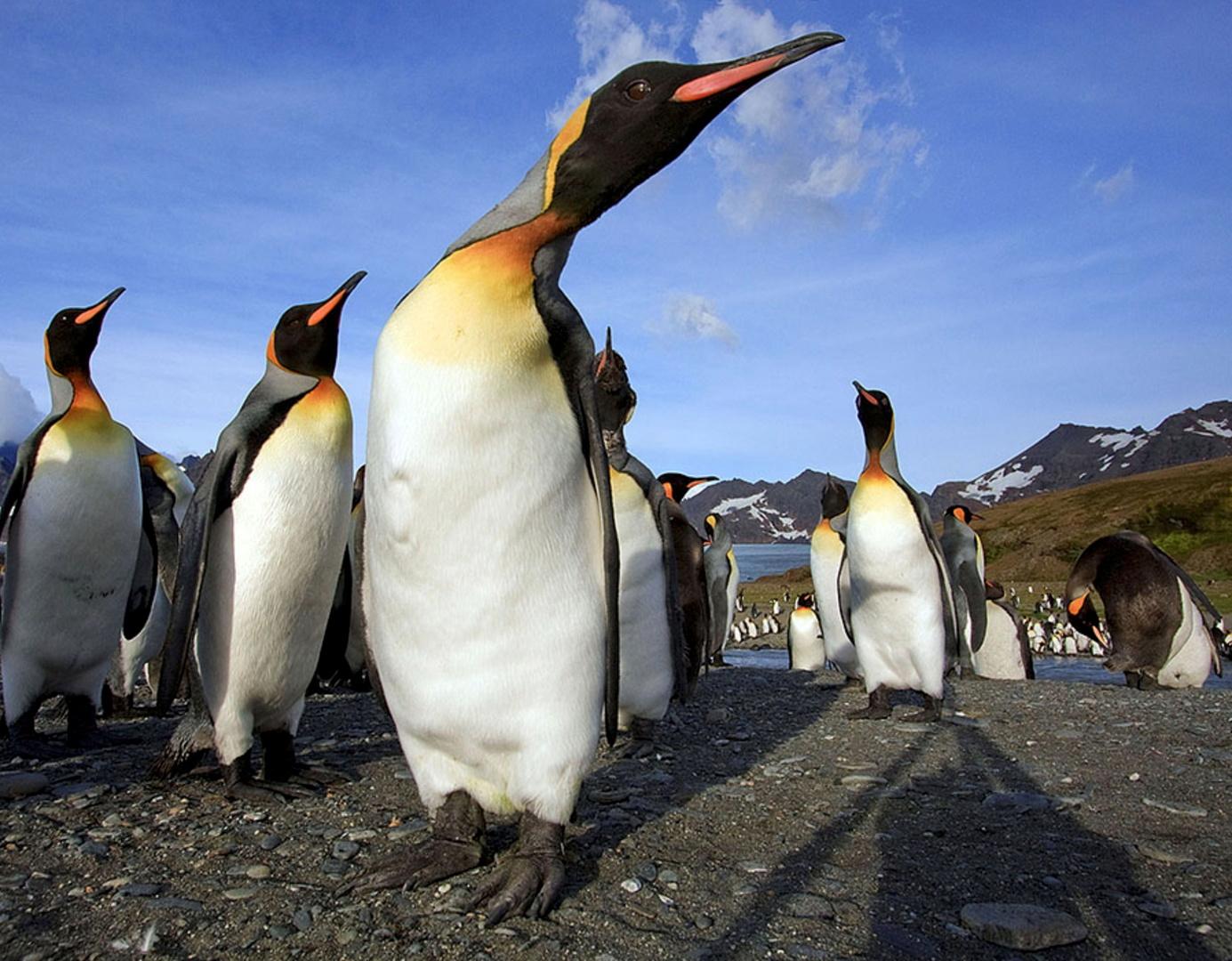 طيور البطريق