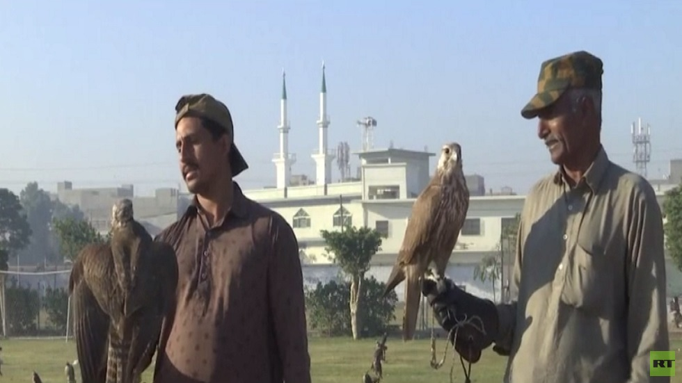 باكستان تحبط محاولة تهريب صقور نادرة