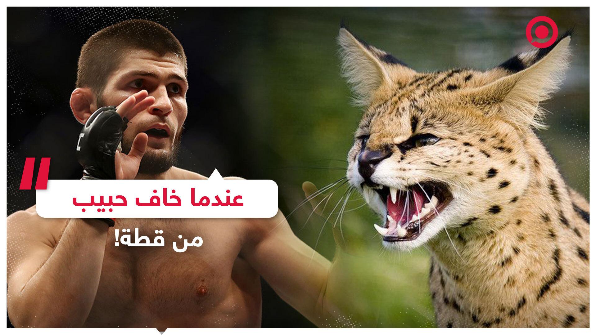 عندما خاف حبيب نورمحمدوف من قطة