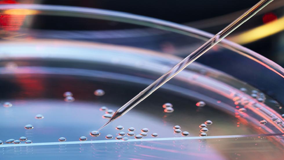 تصوير أولى علامات الاستجابة المناعية في الجنين النامي!
