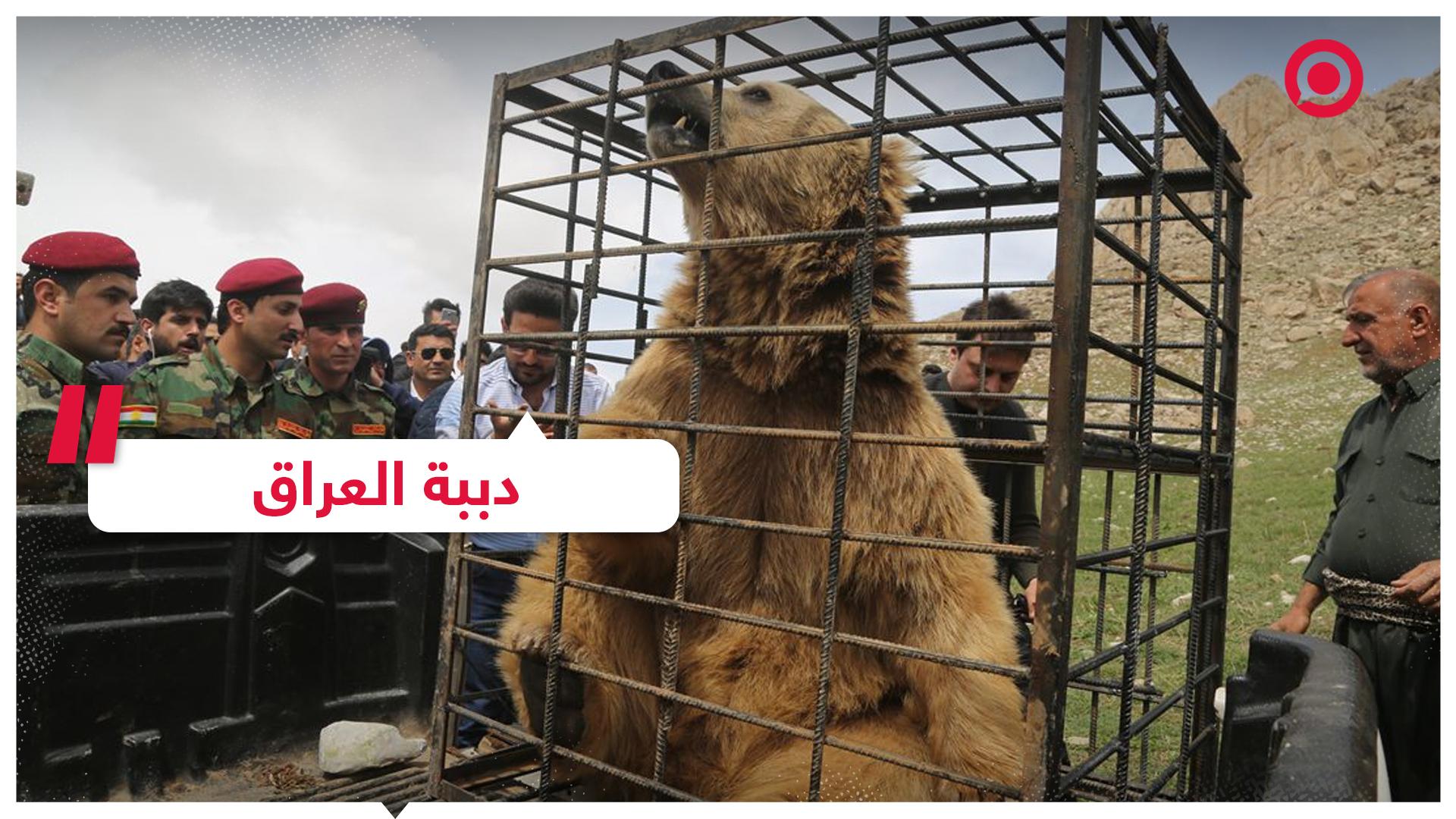 إطلاق 6 دببة في أحد جبال إقليم كردستان العراق