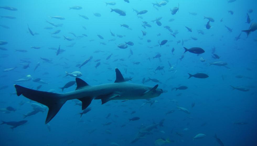 كاميرا توثق اصطياد سمكة قرش في الساحل الأسترالي