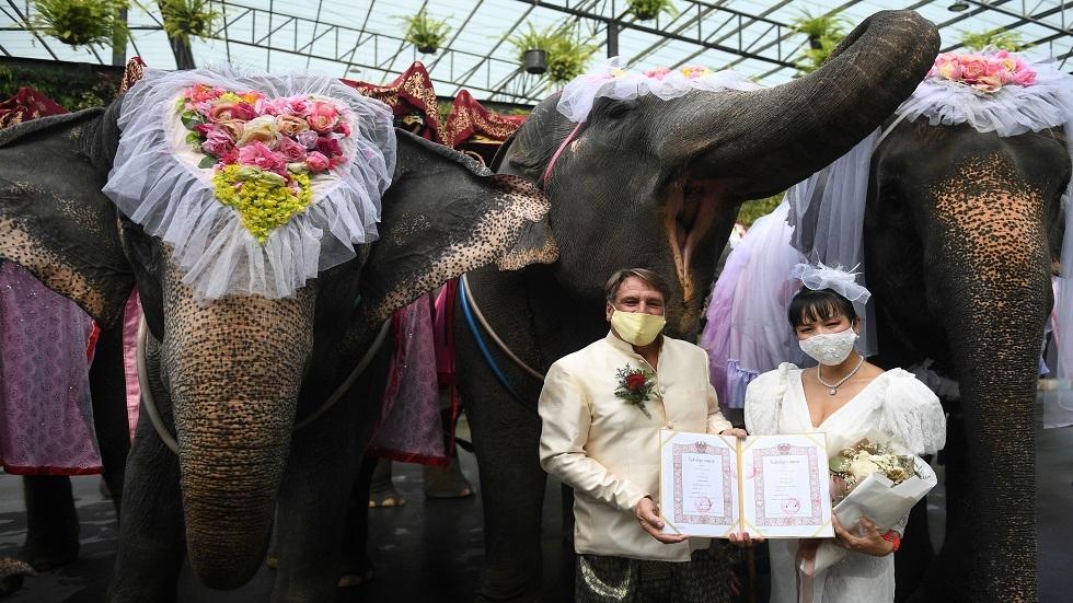 زفاف جماعي على ظهور الفيلة في تايلاند بمناسبة عيد الحب