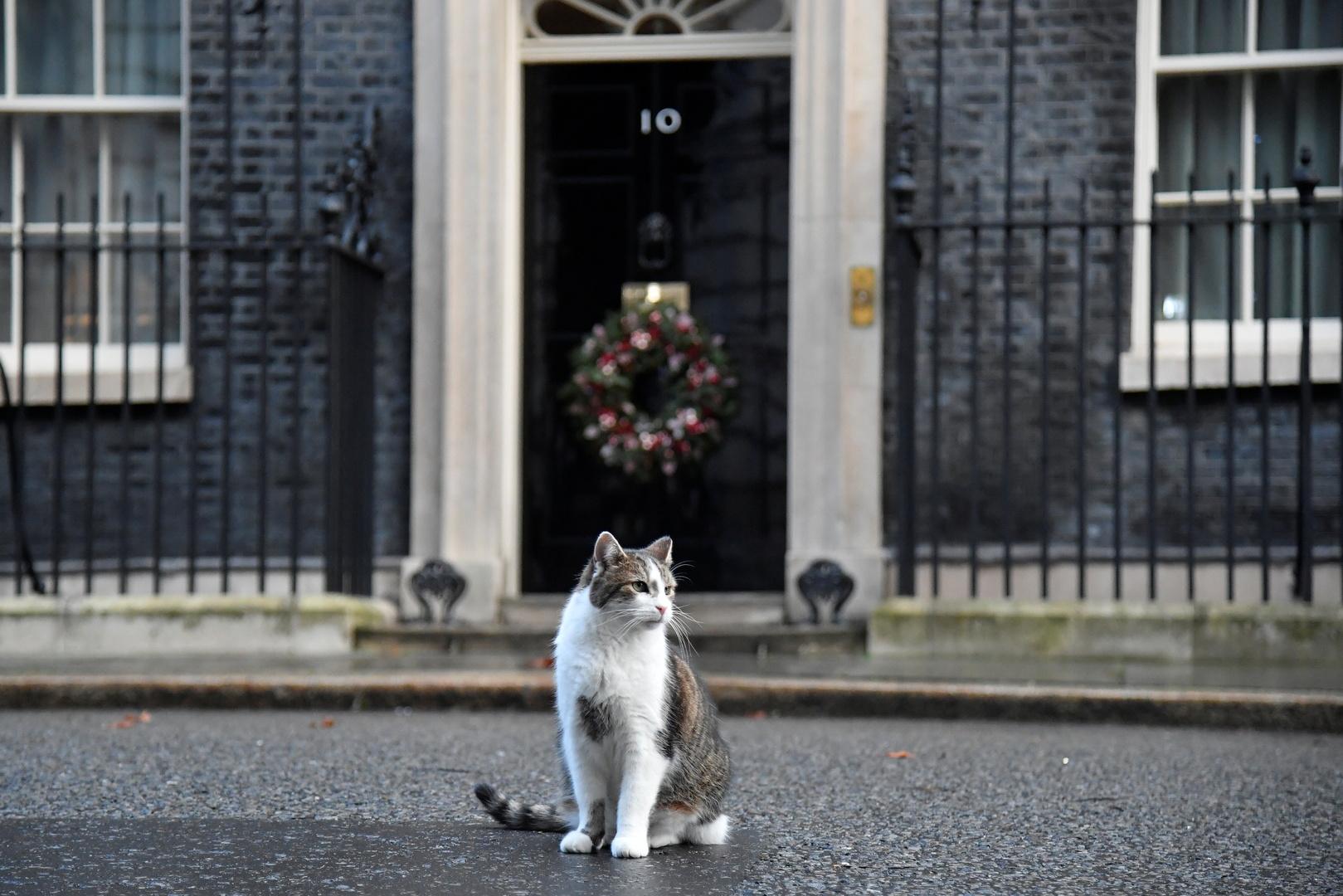 القط لاري يحتفل بالذكرى العاشرة لتوليه مهامه في