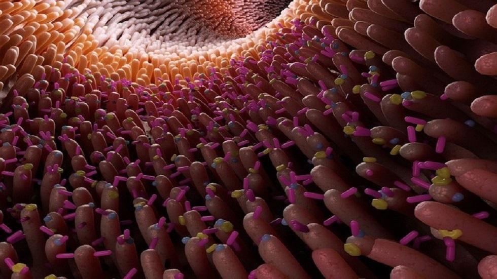 اكتشاف 140 ألف فيروس في أمعاء الإنسان