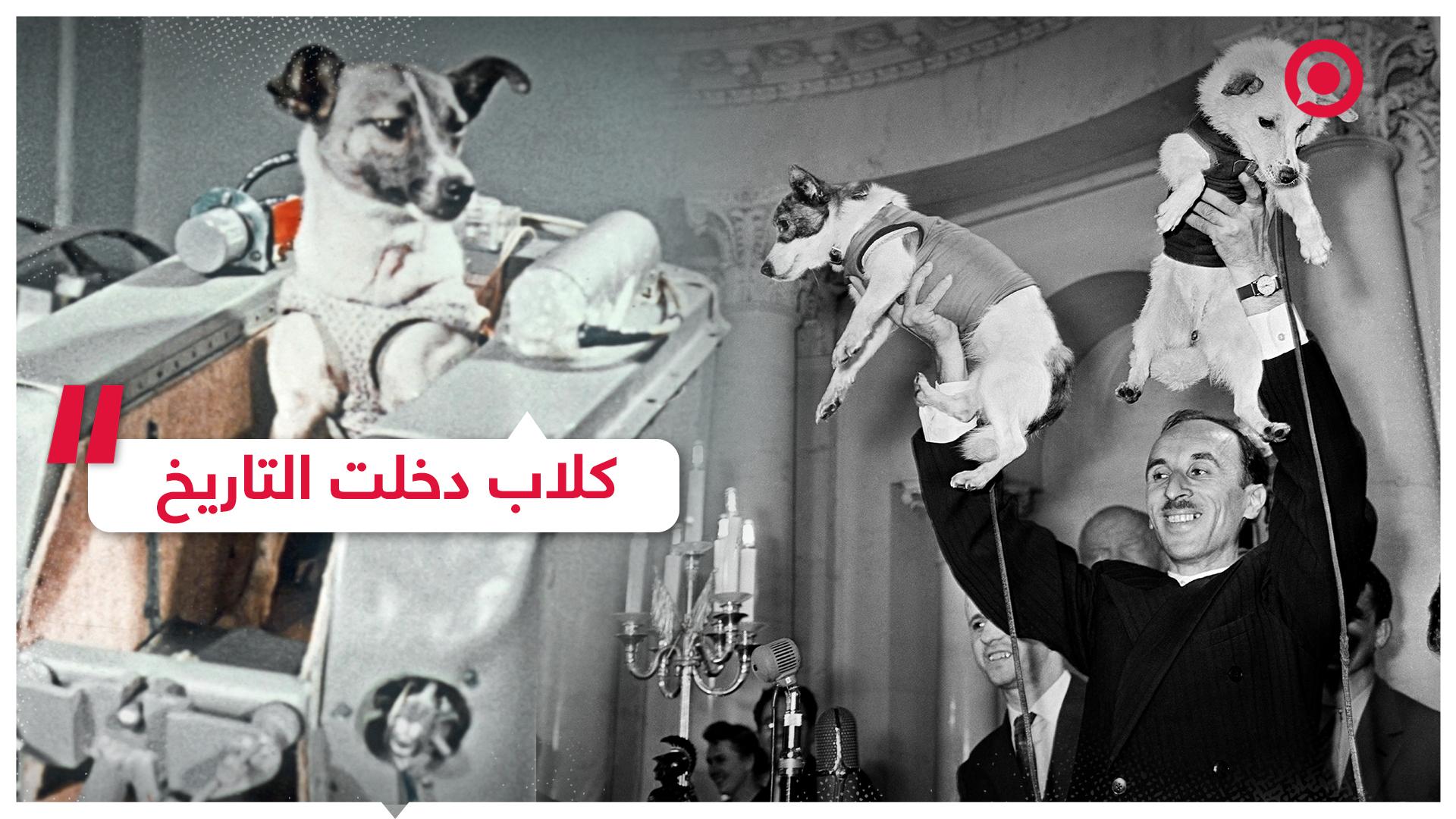كلاب، مشاهير، تاريخ