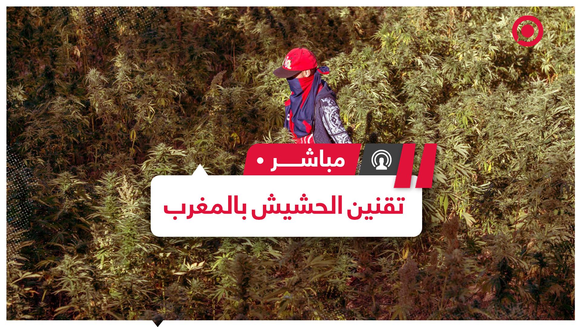 وزير الداخلية المغربي يطرح مشروع قانون لتقنين زراعة
