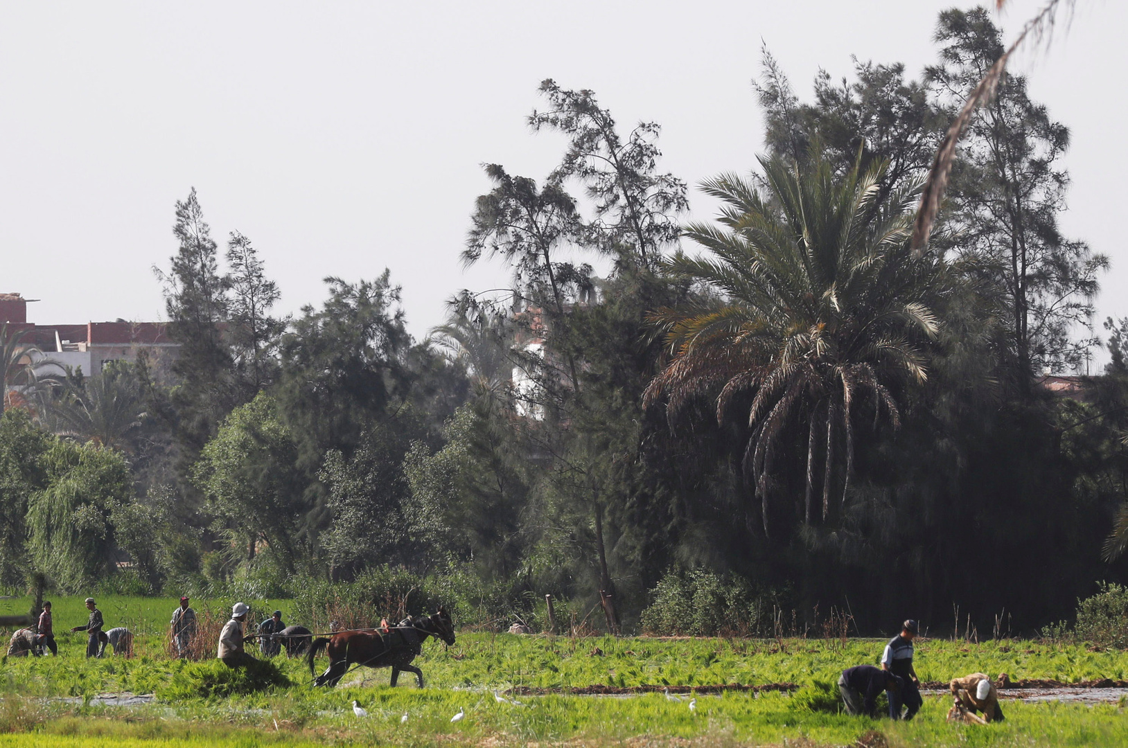 مصر.. ارتفاع حجم الصادرات الزراعية بنحو 5% منذ بداية 2021