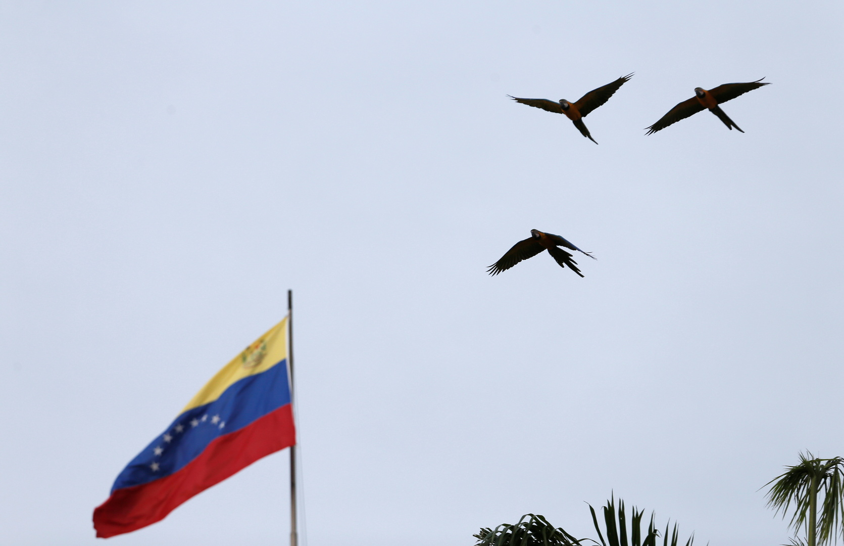 علم فنزويلا في كاراكاس.