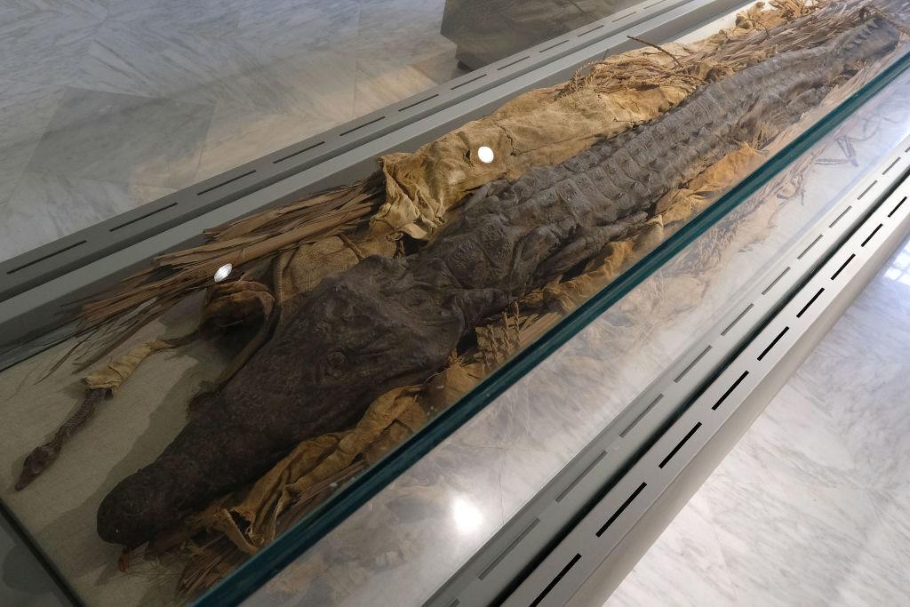 تمساح محنط من مصر القديمة