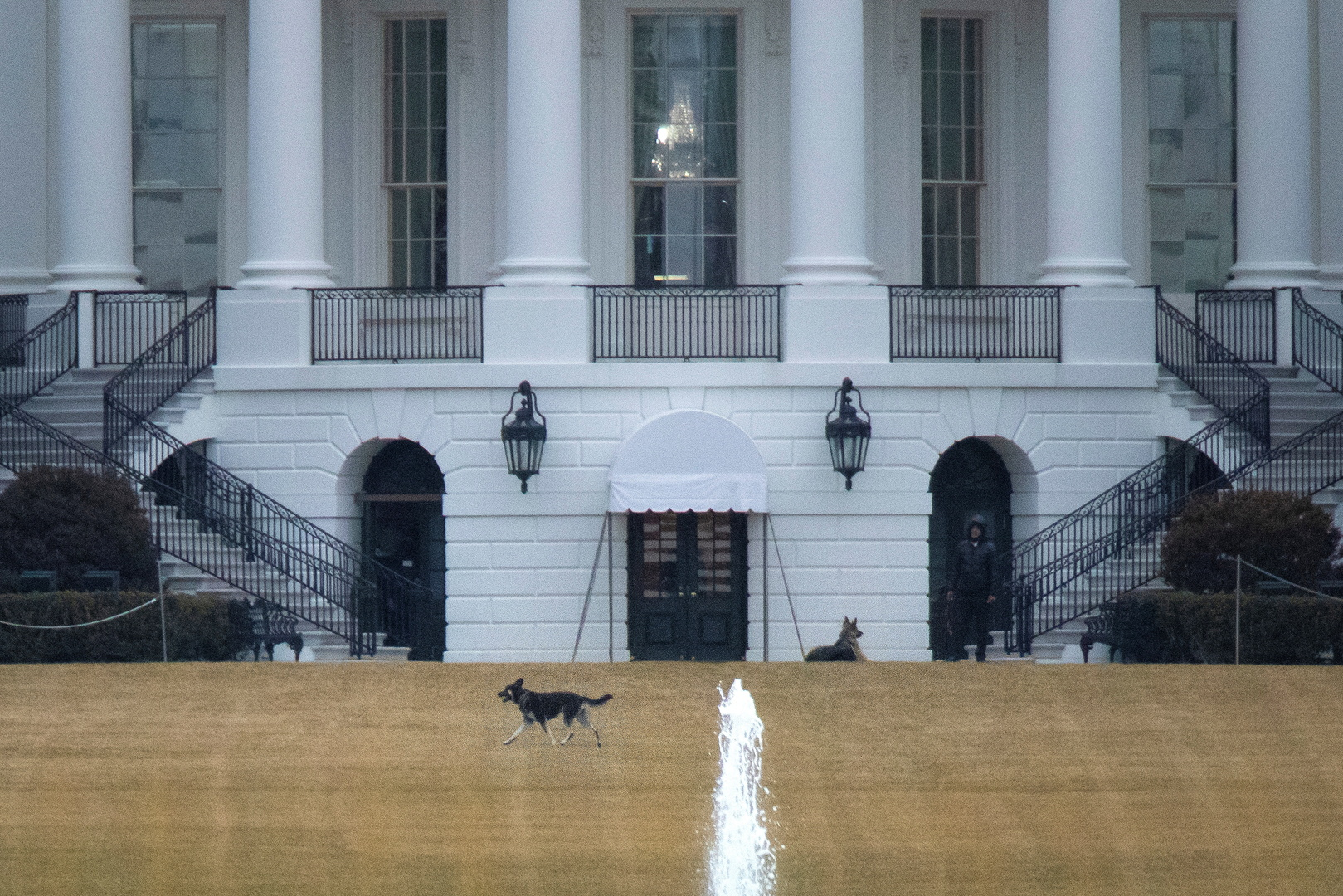بعد الإبعاد.. عودة الكلاب إلى البيت الأبيض