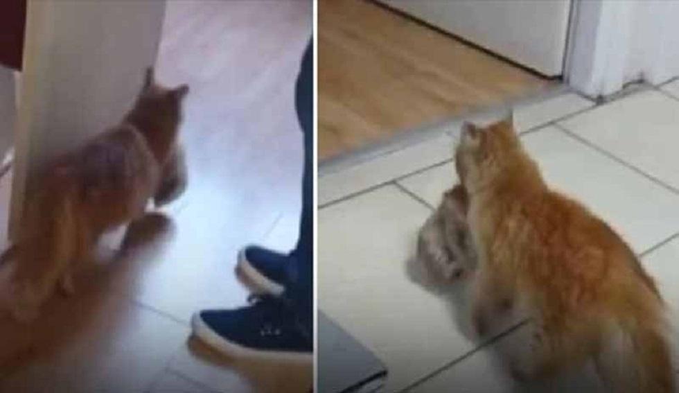 تركيا.. موجة تعاطف مع قطة حملت مولودها المصاب إلى المستشفى طلبا للمساعدة