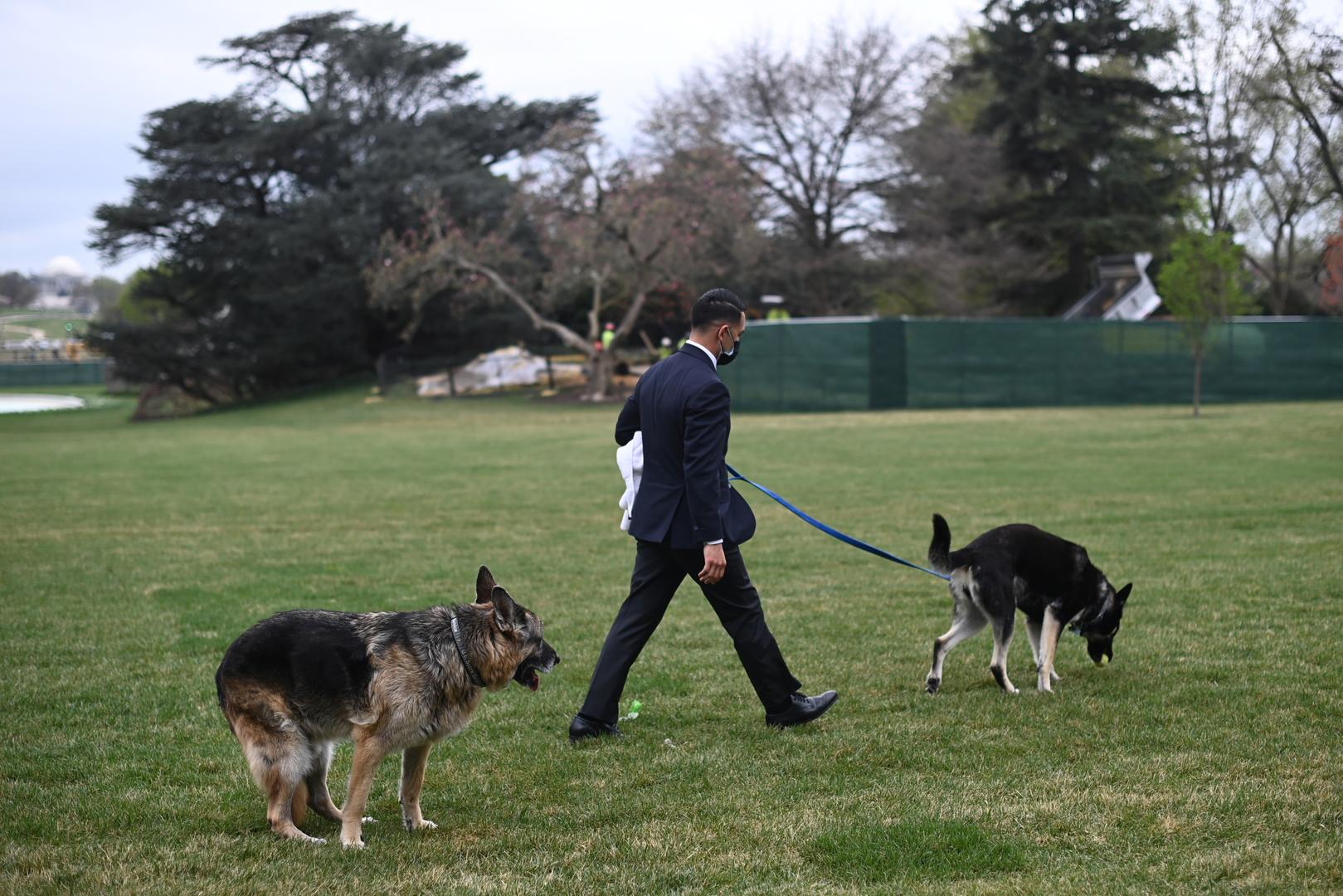 مرة جديدة كلاب بايدن تسبب مشكلة... كلب يقضي حاجته في أحد ممرات البيت الأبيض