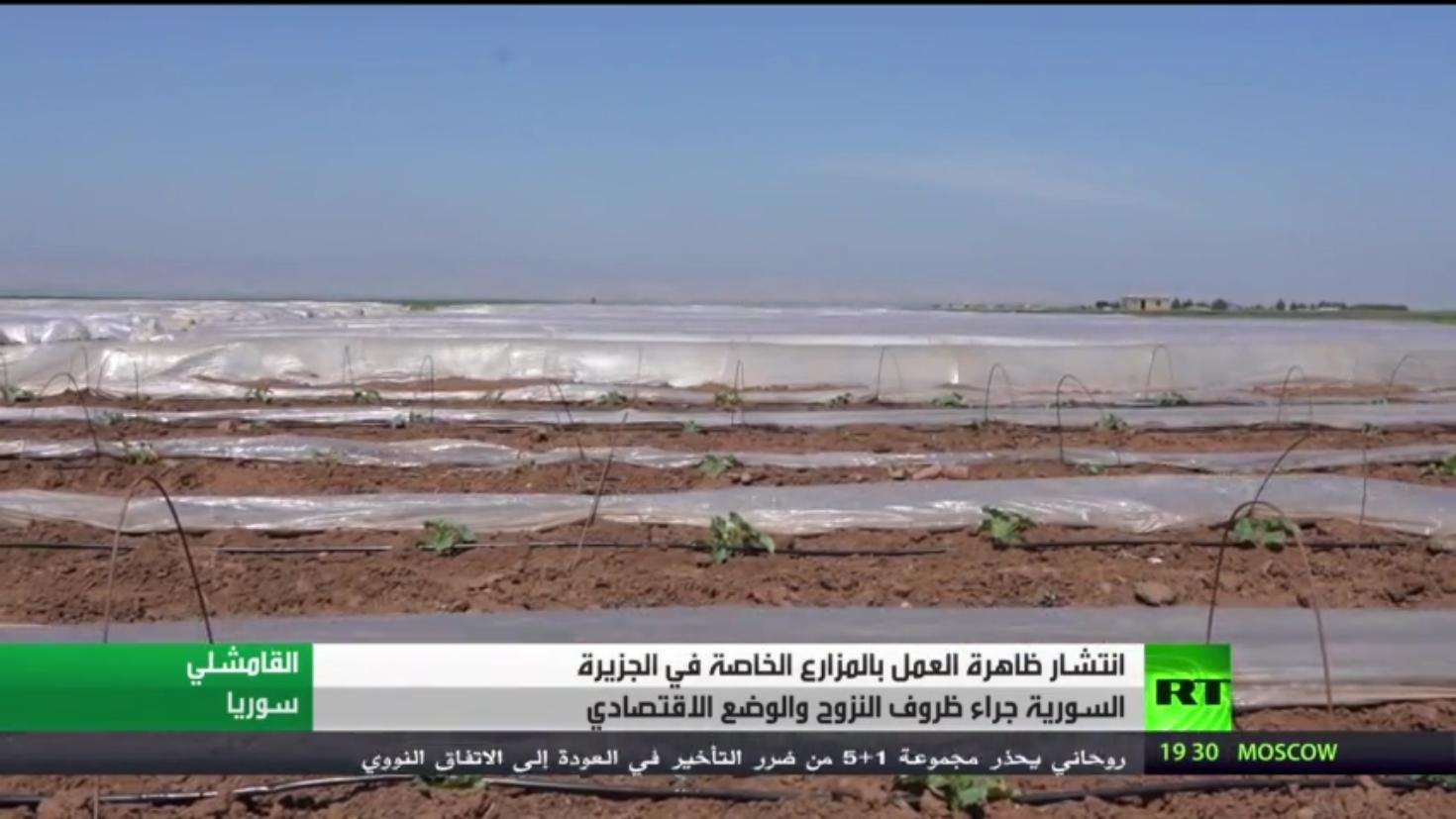 ظاهرة العمل بالمزارع الخاصة بالجزيرة السورية