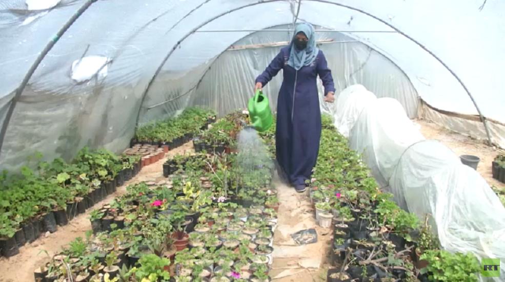 غزة.. قصة شغف مع زراعة الورد