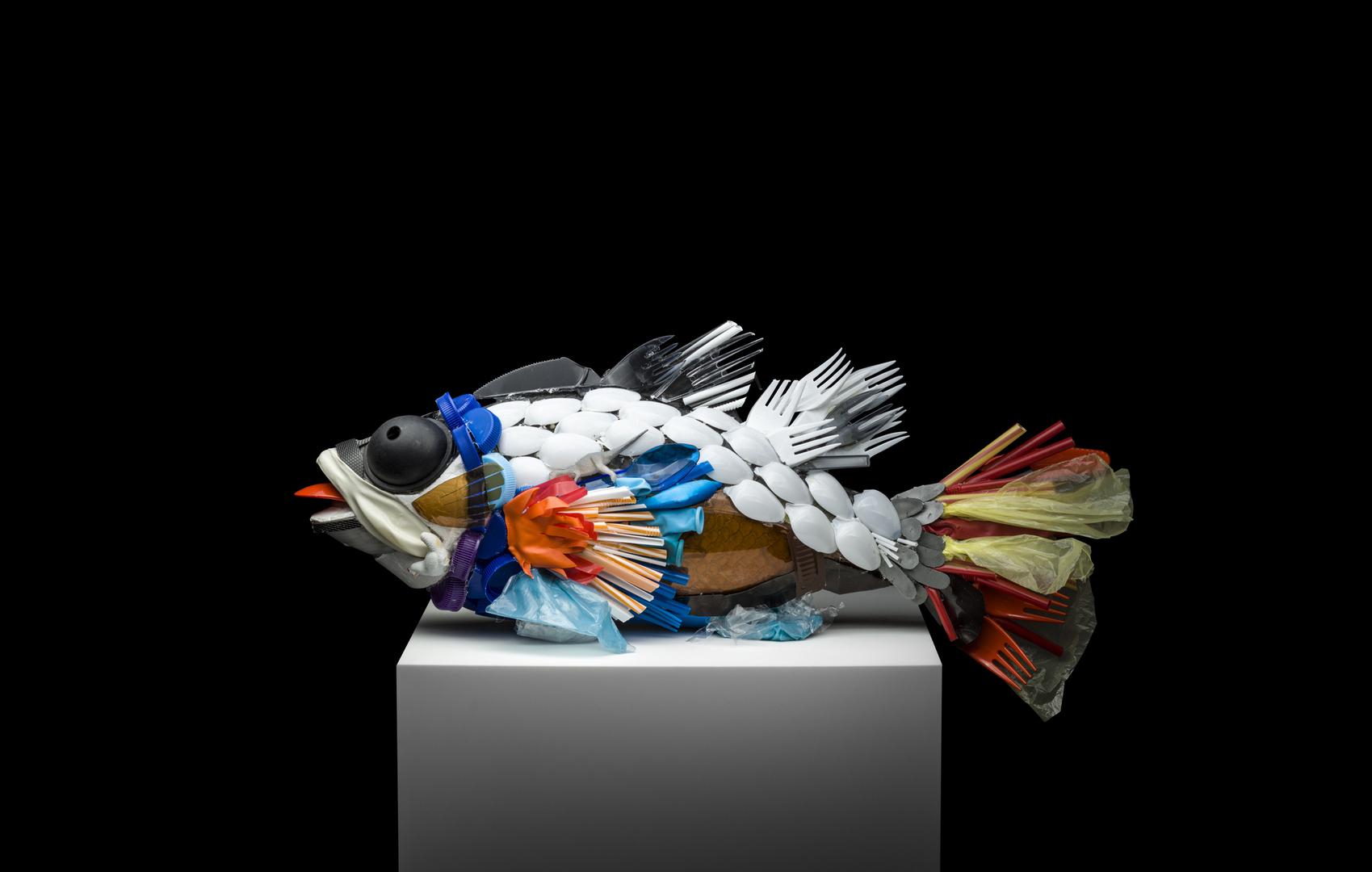 العلماء ينتجون بلاستيكا قابلا للتحلل الحيوي مصنوعا من بقايا الأسماك